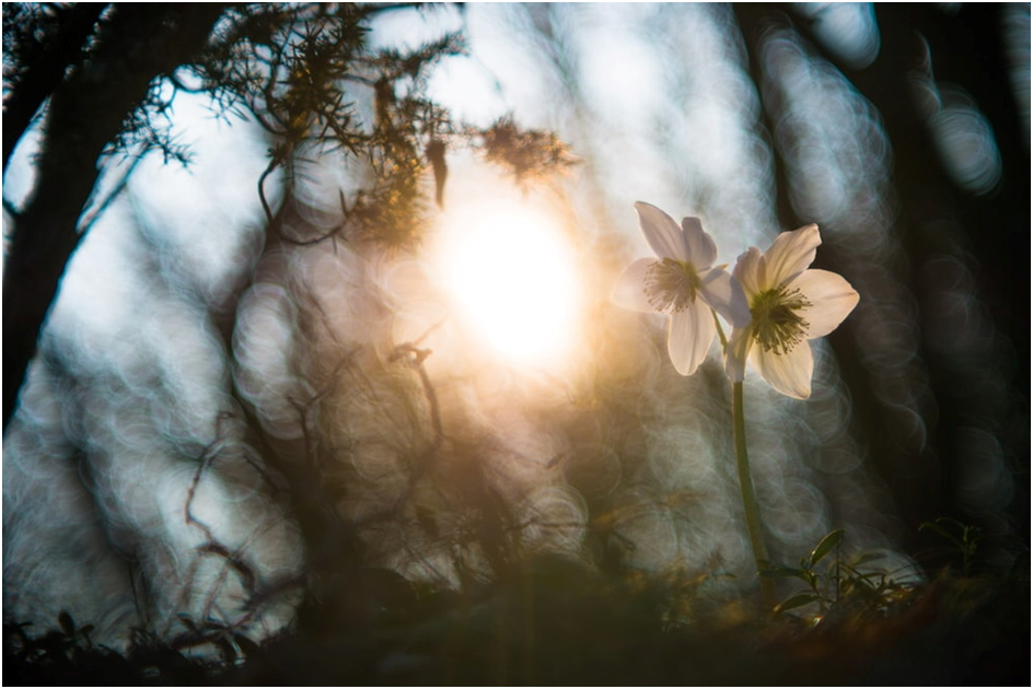 Light and flowers